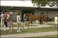 Fasig-Tipton Officials, Consignors Hoping for a Strong July Yearling Sale