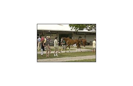 Potential buyers inspect horses at Fasig-Tipton.