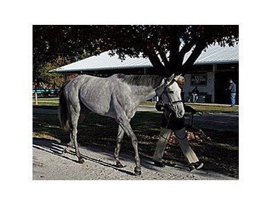 Stardom Bound is one of the grade I winners to be offered at the 2008 Fasig-Tipton Kentucky November select sale.
