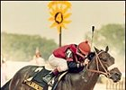 Aloma's Ruler, winning the 1982 Preakness Stakes.