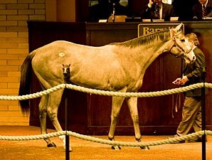 Unbridled's Song Colt Tops at Barretts