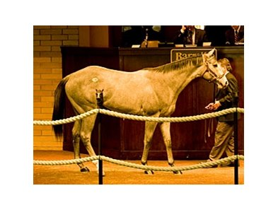 Colt; Unbridled's Song - King Shooting Star by Storm Cat brought $475,000 to top the sale.