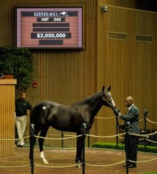 Keeneland Sale Continues Downward Spiral