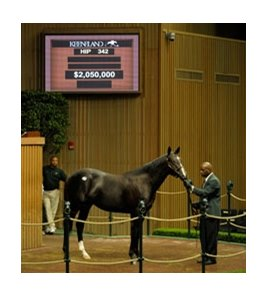 Hip #342; Storm 'n Indian, colt, Storm Cat - Fleet Indian by Indian Charlie, brought $2,050,000 to top the second session of the Keeneland September yearling sale.