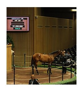 Hip #307, filly; Bernardini - Silk n' Sapphire by Smart Strike brings $1.2 million at the Keeneland September sale on Sept. 13.