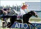 Atto Mile winner Soaring Free among finalists for Canada's Sovereign Awards.