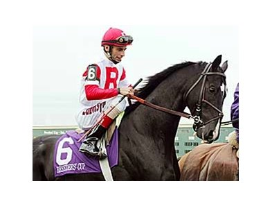 Roses in May was one of several graded stakes winners selected by Danzel Brendemuehl.