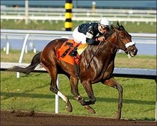 Sun King Works Sharp 5 Furlongs for Tampa Bay Derby