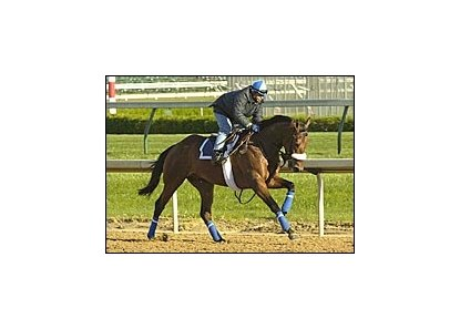 High Limit, in strong gallop at Churchill Downs Monday morning.