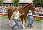 Fans cheer local hero Funny Cide on his day at Saratoga.