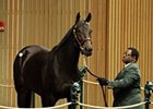 Harmonious brought $2.8 million in the first session of the Keeneland November breeding stock sale.