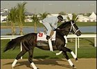 Magna Graduate, on the track in Dubai.