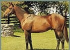 Slew o' Gold, Three Chimneys Farm stallion, has been pensioned.