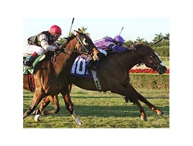 Twilight Meteor holds off Rahy's Attorney to win the Tropical Turf Handicap.