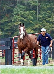 Pensioned Maryland Stallion Carnivalay Dead