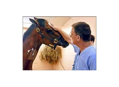 Veterinary surgeon Dr. Dean Richardson rubs Kentucky Derby winner Barbaro's head in the intensive care unit.