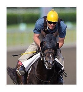 Mobilizer's starts include a second place finish last out in the June 13 Plate Trial Stakes at Woodbine.