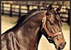 The late, great Seattle Slew.