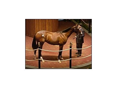 Colt by first-crop sire Buddha sold for $500,000.