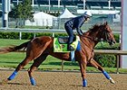 "Dortmund gallop at Churchill Downs on April 28.<br><a target=""blank"" href=""http://photos.bloodhorse.com/TripleCrown/2015-Triple-Crown/Kentucky-Derby-Workouts/i-D296Njd"">Order This Photo</a>"