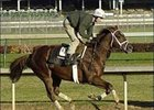 "Classic contender Flower Alley works Sunday morning at Churchill Downs.<br><a target=""blank"" href=""http://www.bloodhorse.com/horse-racing/photo-store?ref=http%3A%2F%2Fpictopia.com%2Fperl%2Fgal%3Fprovider_id%3D368%26ptp_photo_id%3D624147%26ref%3Dstory"">Order This Photo</a>"