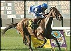 Sulamani Superb in Turf Classic Romp