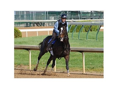 Zenyatta at Churchill Downs 2009.
