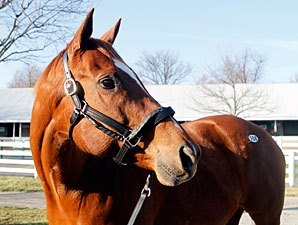 Topliner Brings $1.4 Million at Keeneland