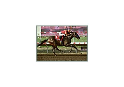 Icecoldbeeratreds, winning the Del Mar Stakes this past September.
