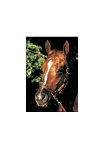 Hennessy, leading juvenile sire of 2001.