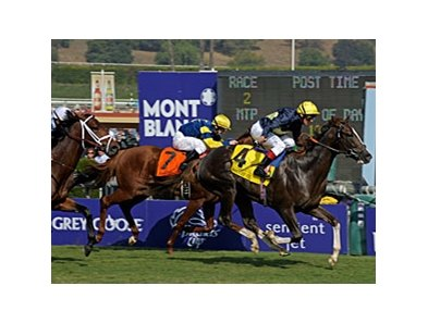 "Pounced and Frankie Dettori get up late to take the Breeders' Cup Juvenile Turf. <br><a target=""blank"" href=""http://www.bloodhorse.com/horse-racing/photo-store?ref=http%3A%2F%2Fpictopia.com%2Fperl%2Fgal%3Fprovider_id%3D368%26ptp_photo_id%3D8610380%26ref%3Dstory"">Order This Photo</a>"