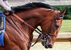 American Pharaoh gallops at Churchill Downs May 24.
