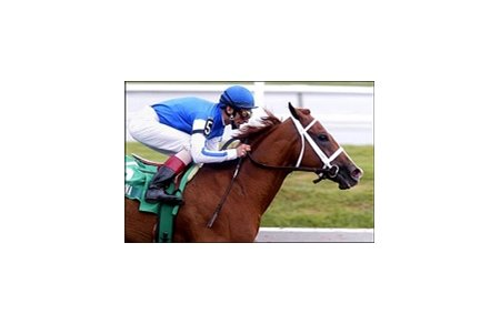 John Velazquez rides Maddalena to the win in the Old Hat Stakes at Gulfstream Park.