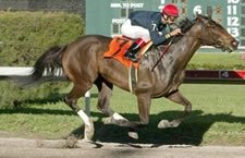 Storm Flag Flying Takes On Randaroo in Distaff BC