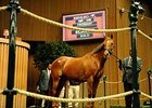 2002 Horse of the Year Azeri brought $2,250,000 to top session one of the Keeneland November breeding stock auction.