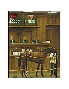 Colt topped Monday's OBSC sale session.