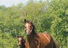 Supercharger with her 2010 colt by Medaglia d'Oro, now named Superfection.