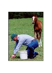 Equine nutritionist Dr. Steve Jackson, shown here taking pasture samples while a foal looks on.