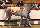 Aaman, a winning son of Dubai Destination, was the most expensive horse sold during the fourth and final session of the Tattersalls autumn horses in training auction Oct. 28 in England.