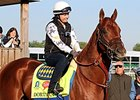 Dortmund to be Saddled on Paddock Path