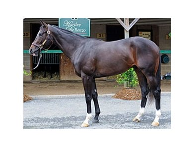 During the final session, hip #519, a Tiznow colt, was the most expensive horse, bringing $470,000.