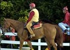 Afleet Alex once again favored at the window.