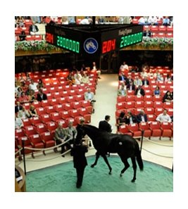 On A Storm, Hip #204; colt, Storm Cat - Onaga by Mr. Prospector brought $2.8 million at Fasig-Tipton Saratoga.