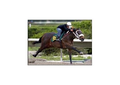 Forest Camp filly goes eighth of a mile in :10 at OBS under tack show.