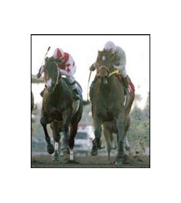 Kona Gold, right, caught Radiata, left, to win the El Conejo earlier this year.