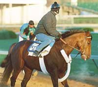 Zito Eyes Schedule for A P Valentine; Florida Derby Out