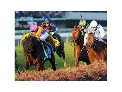 "Court Vision wins the Breeders' Cup Mile, as Goldikova (right) finishes third.<br><a target=""blank"" href=""http://www.bloodhorse.com/horse-racing/photo-store?ref=http%3A%2F%2Fpictopia.com%2Fperl%2Fgal%3Fprovider_id%3D368%26ptp_photo_id%3D9729320%26ref%3Dst"