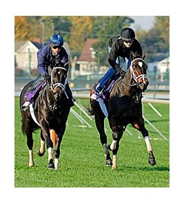 "Stopshoppingmaria (left) and Sweet Cat work on the turf at Churchill Downs on October 29. <br><a target=""blank"" href=""http://www.bloodhorse.com/horse-racing/photo-store?ref=http%3A%2F%2Fpictopia.com%2Fperl%2Fgal%3Fprovider_id%3D368%26ptp_photo_id%3D9722425%26ref%3Dstory"">Order This Photo</a>"