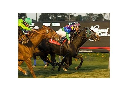 Unusual Suspect (center) gets up in time to win the Hollywood Turf Express.