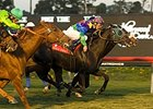 No Blaming 'Suspect in Turf Upset